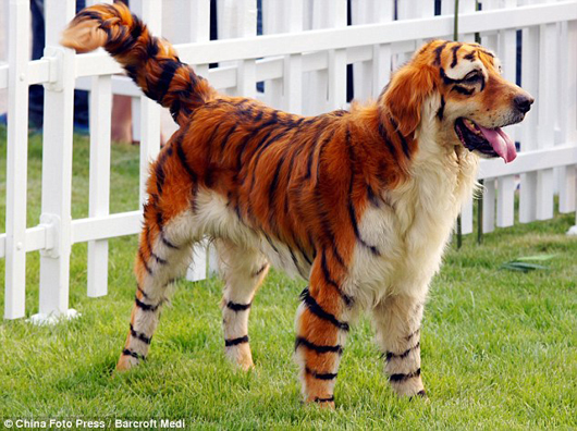Tiger Dog Modding - Tiger Hund